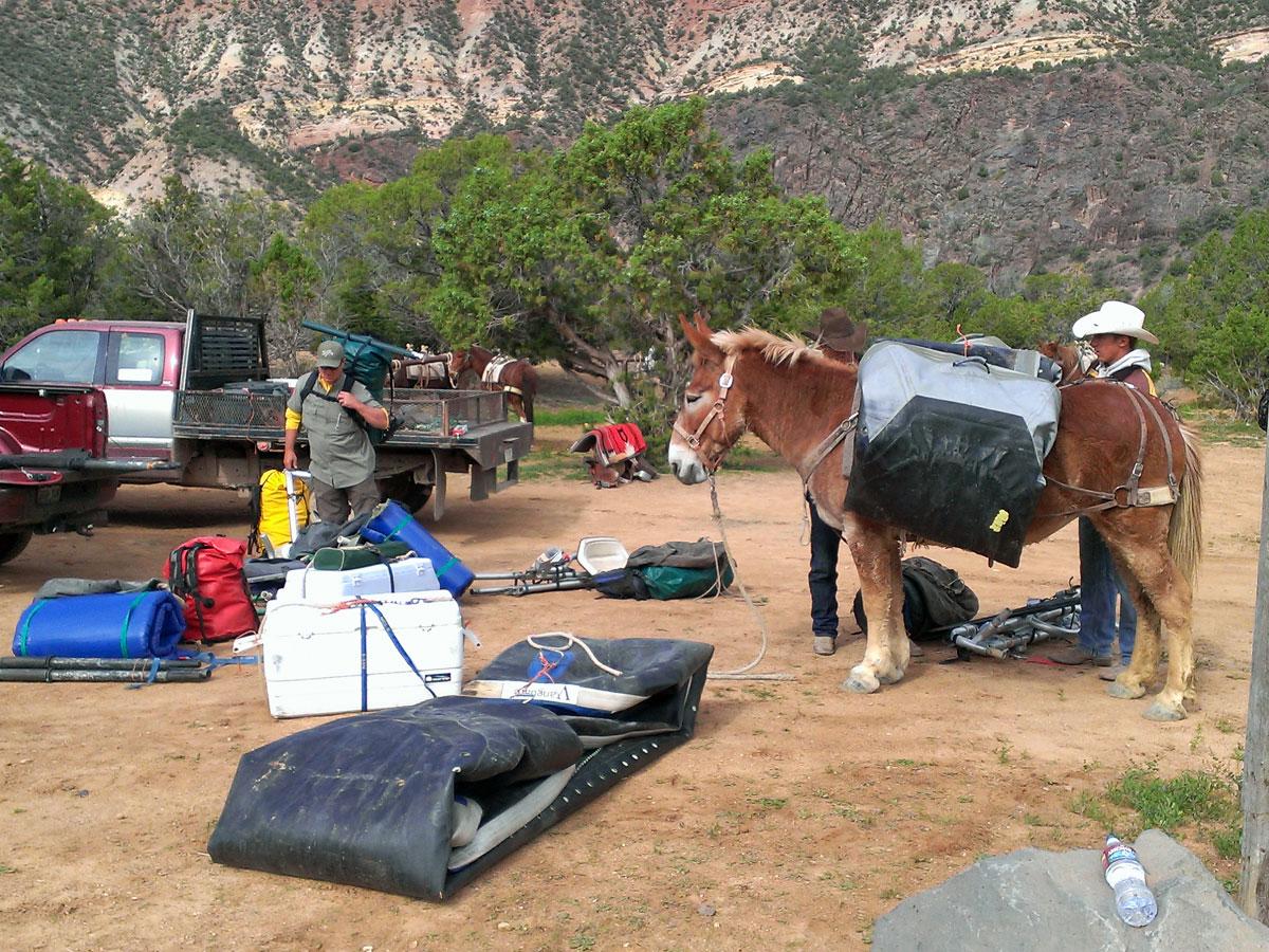 gunnison gorge pack horses