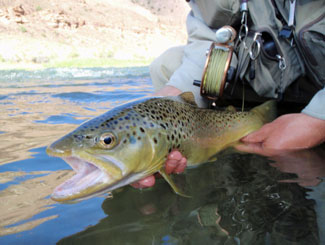 trout-fishing-gunnison-river